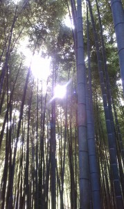 japan, forest, bamboo, tokyo, hiking, friends, fun, happy, jewelry, alter ego, erika walton