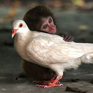 Strange-animal-relationships_OM-Times